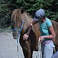 Formation cheval partenaire (éthologie) - civam 07 - ardèche