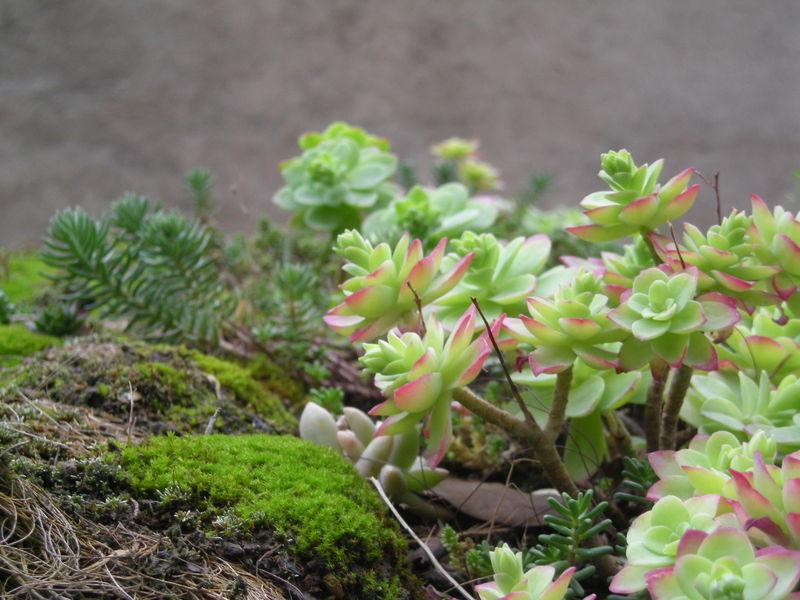 douceur pour plantes grasses le blog du jardin partag leroy s me. Black Bedroom Furniture Sets. Home Design Ideas