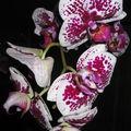 9 - Les fleurs de mon jardin, mes bouquets