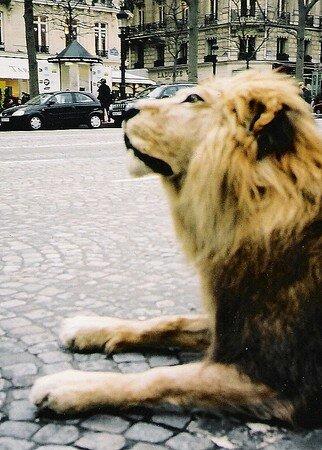 Lion_Empaill__sur_les_Champs_Elys_es