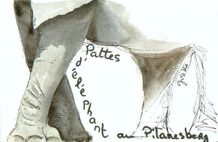 pattes_ailes_mageoires_2