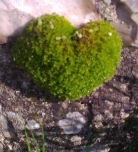 coeur de mousse (3)