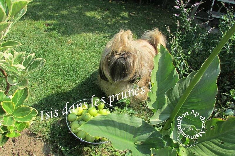 Isis et les prunes