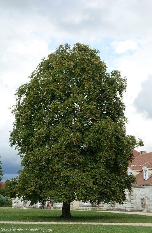 J4 Sal arbre