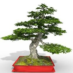01 Fagus sylvatica bonzaï beech tree 3d plant model factory 3ds cad max fbx obj icon reduced