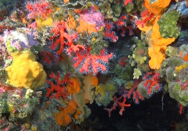 corail_rouge