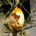 bébé oeuf orange