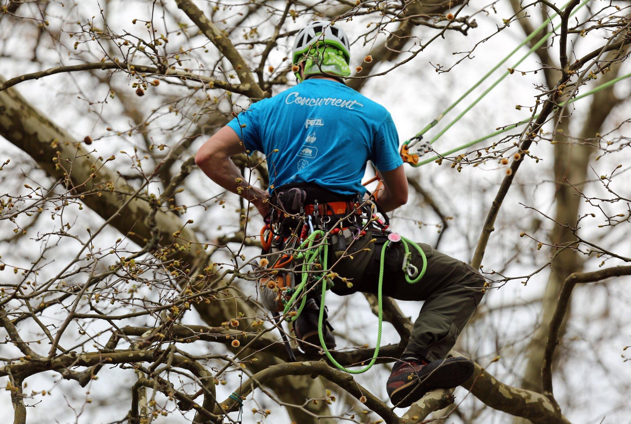 Rencontre regionale d'arboriculture 2016