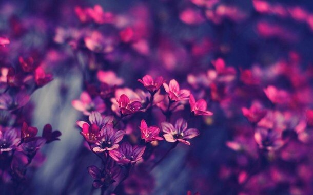 background-cute-flowers-pink-Favim