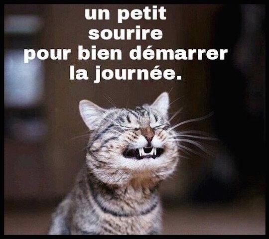 chat bonjour sourire