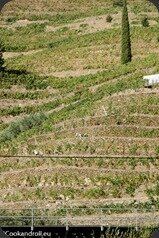 Symington-Graham-Porto-Douro-102_thumb[3]