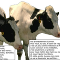 Vaches objets (04/03)