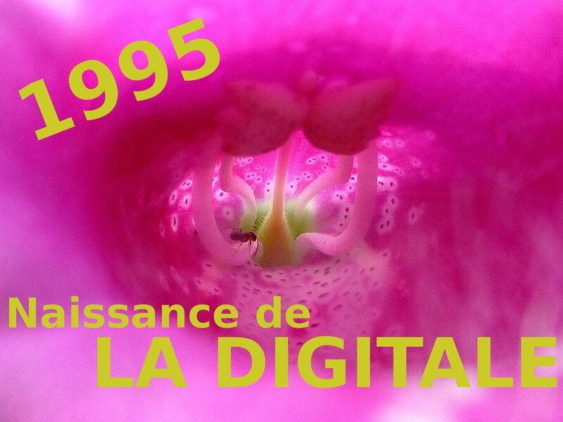 1995-naissance de La Digitale
