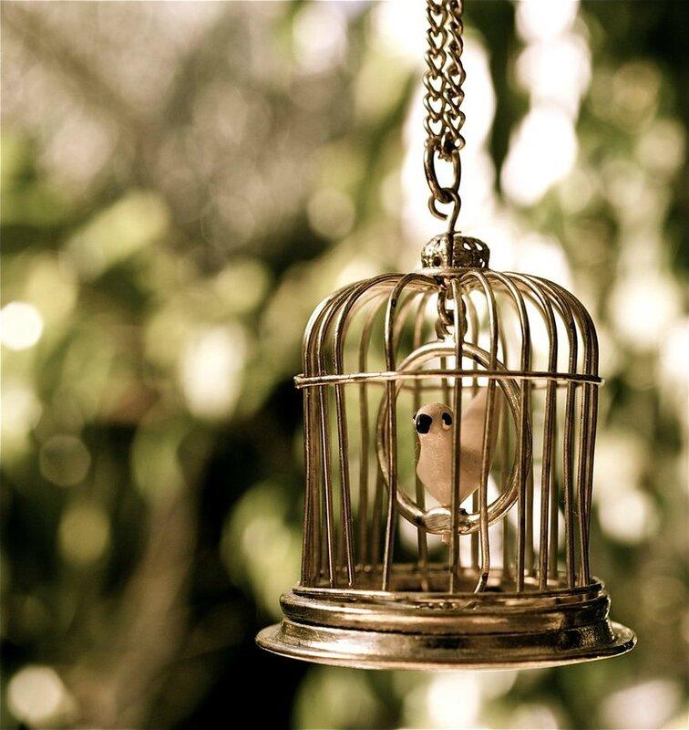 gilded_cage_by_missspocks-d3jb4m2