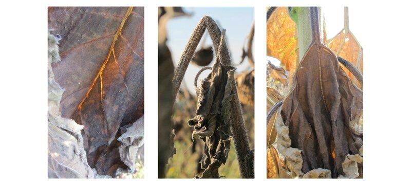 14-09-15, Seeds (4)