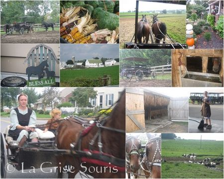 Lancaster_Campagne_Amish_2