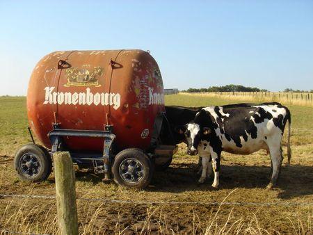 Pourquoi_le_lait_est_meilleur_en_Charentes