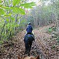 balade liberté à saint brice - cheval nature (15)