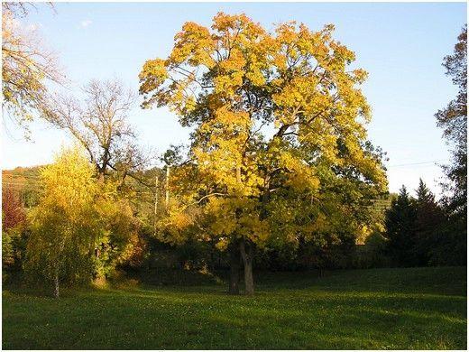 automne1005