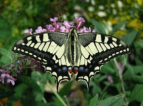 Thomas_Bresson_-_Machaon-1_(by)