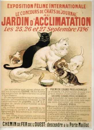Affiches chats