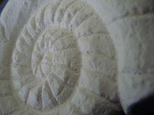 fossile, céramique, diffuseurs, parfums, decoration, lesdécosdelaflo, lot, blanc, imitation, 1, gros plan, détail