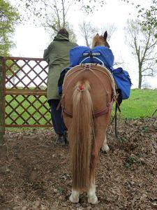être un cheval de randonnée c'est loin d'être facile
