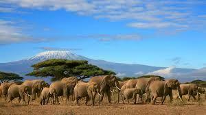 elephant kili2