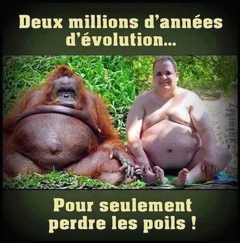 evolution de l homme