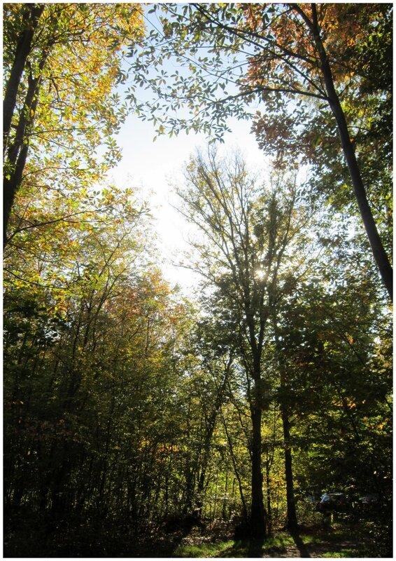 2017-10-15 - Forêt de Brumath