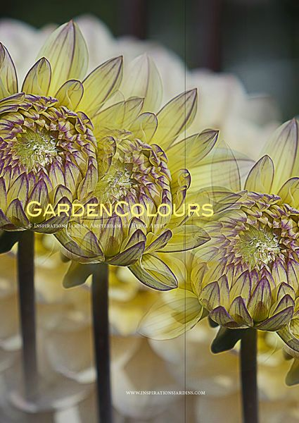 GardenColours1_Page_01