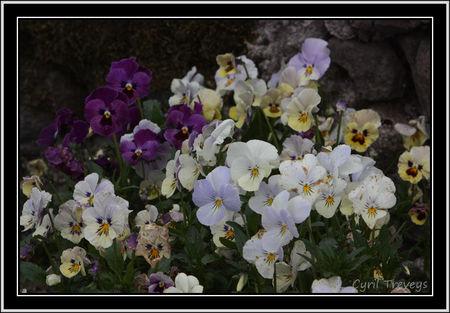 2010_05_23_Mes_pens_es_vivaces__2_