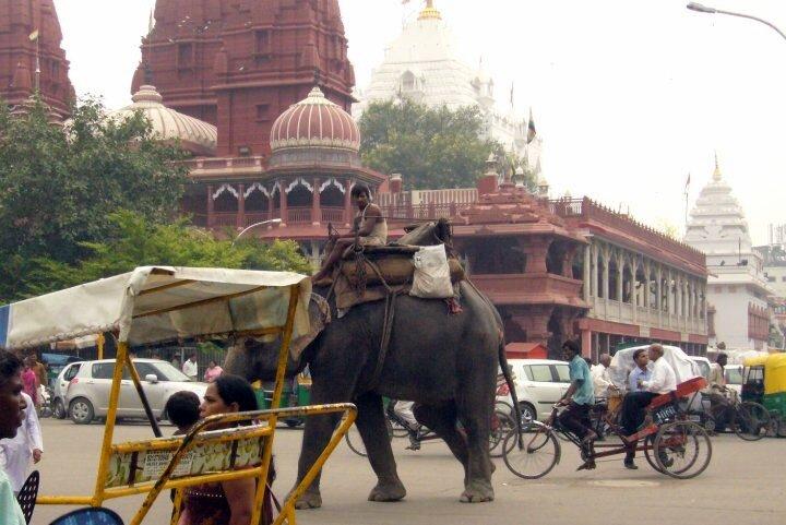 Delhi un elephant dans le trafic