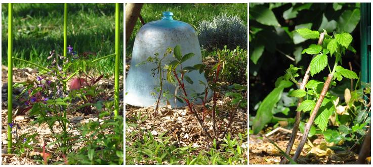 Du potager verger naturaliste au pr gourmand un nouveau for O jardin gourmand toulouse