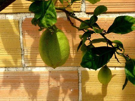 citrons du 8