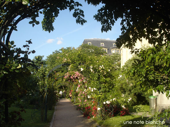 Paris_Jardin_des_Plantes_roseraie