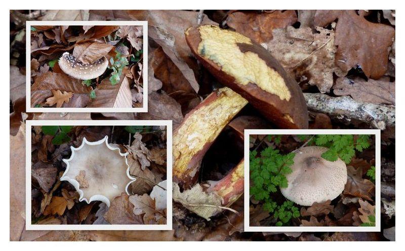 Champignons a volonte mon univers regard sur la nature cr ations - Les champignons de jardin sont ils comestibles ...