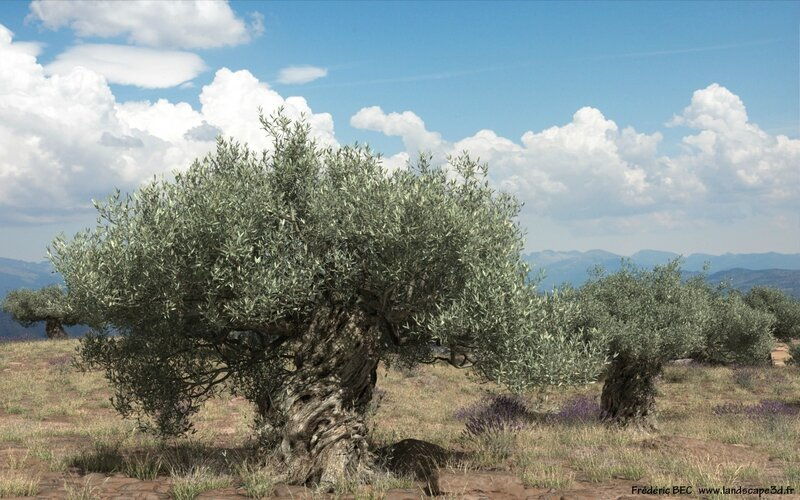 Olea europaea olive tree 3D tree plant model TPF The Plant Factory Published landscape