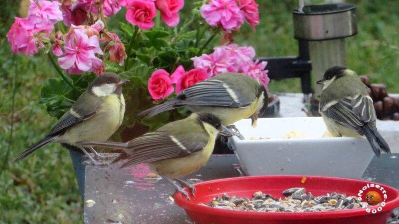 Oiseaux_2934