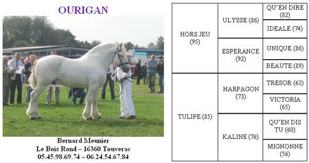 Ourigan