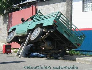 m_canicien_automobile