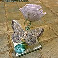 Rose Eternelle Bleue