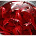Infusion hibiscus