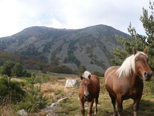 2008 10 07 La Jument et son Poulain devant le Mont Mézenc