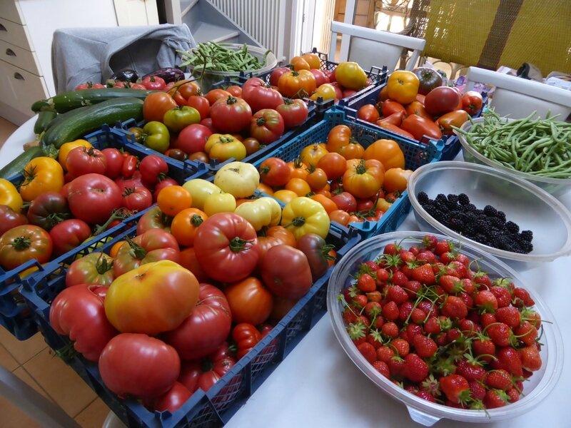 17-tomates, fraises, mûres, haricots, courgettes, concombres, aubergines (5)