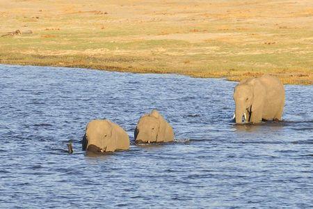 Botswana (83)