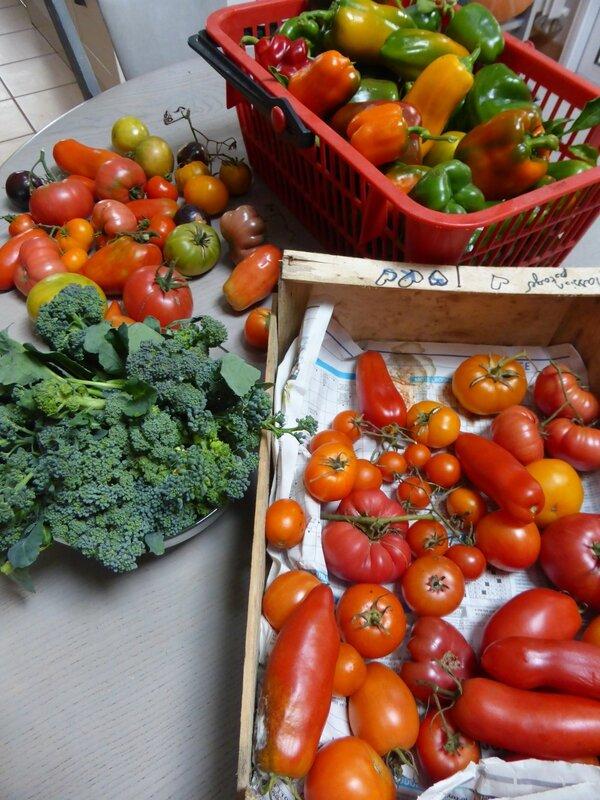 6-récolte du jour (1)