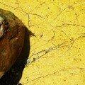 L'ombre de la Crevette