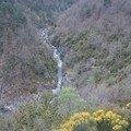 2008 04 20 Vu sur le rivière de Roumezoux avec les genets au devant