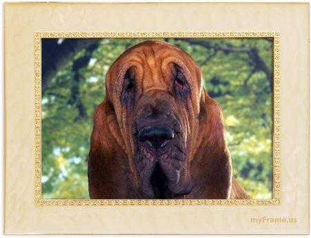 cadre_chien